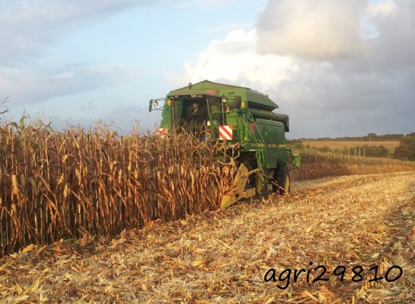 Moisson de mais grain 2014