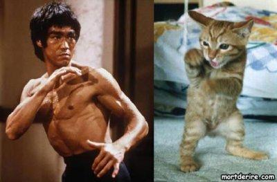 chat entre homme