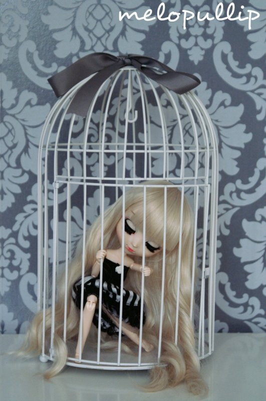 I am a bird in a cage ...