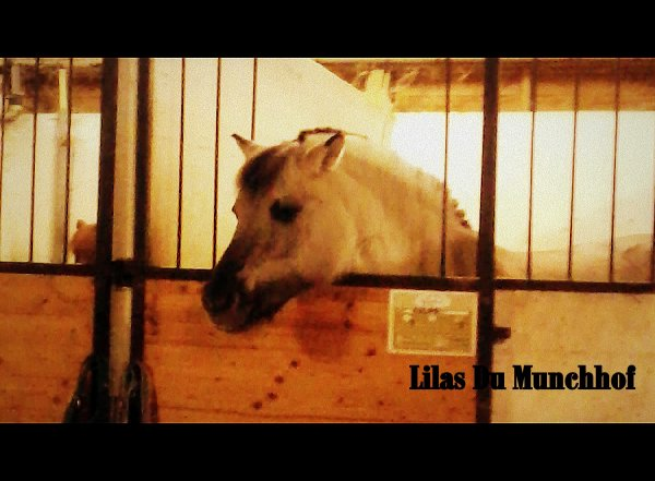 Lilas Du Munchhof