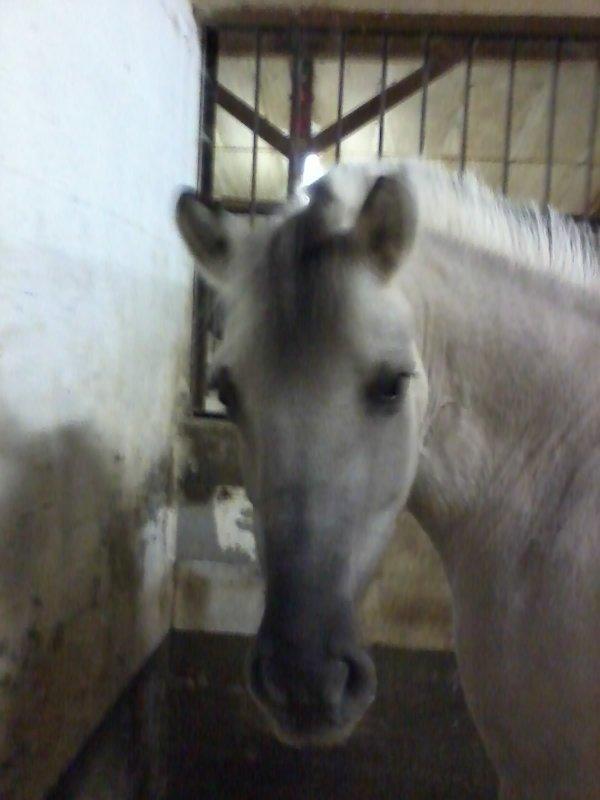 Il n'y a pas de secrets aussi intimes que ceux d'un cavalier et de son cheval <3