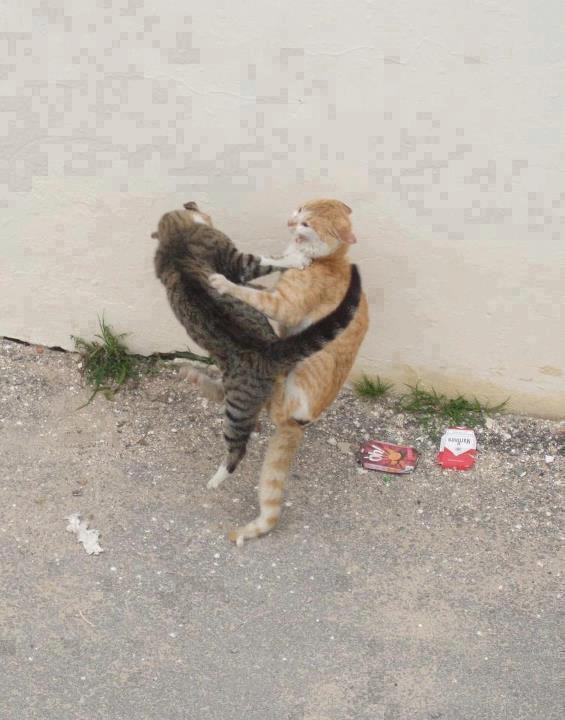 mortal combat cat version