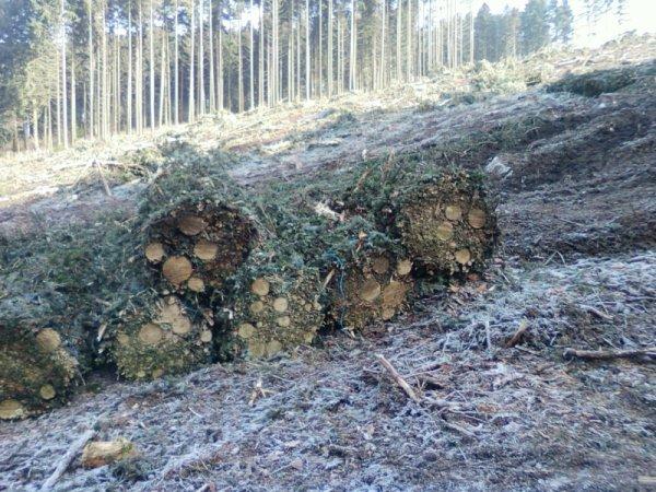 chantier forestier