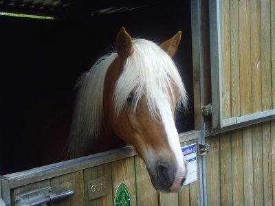 """ღ """" Lance ton coeur au dessus d'un obstacle, Ton cheval Suivra """" ღ"""