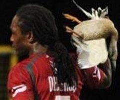 Misérable Zulte, Anderlecht DOIT être champion...