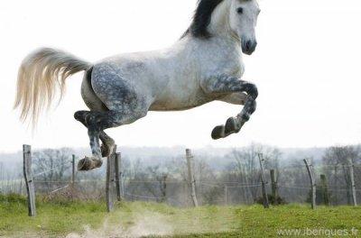 Ma race préférée de chevaux