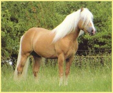 Le cheval une beautés bien plus que ça ...