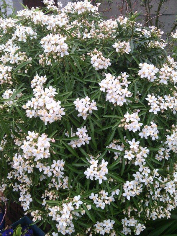 Les fleurs de mon jardins
