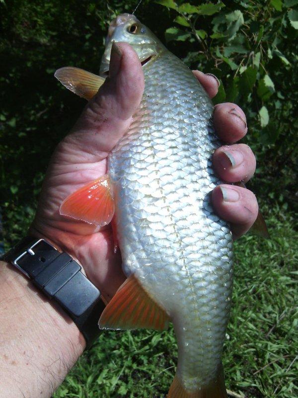 Une partie de pêche de  4 heures