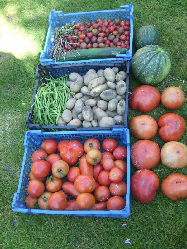 La récolte du jour