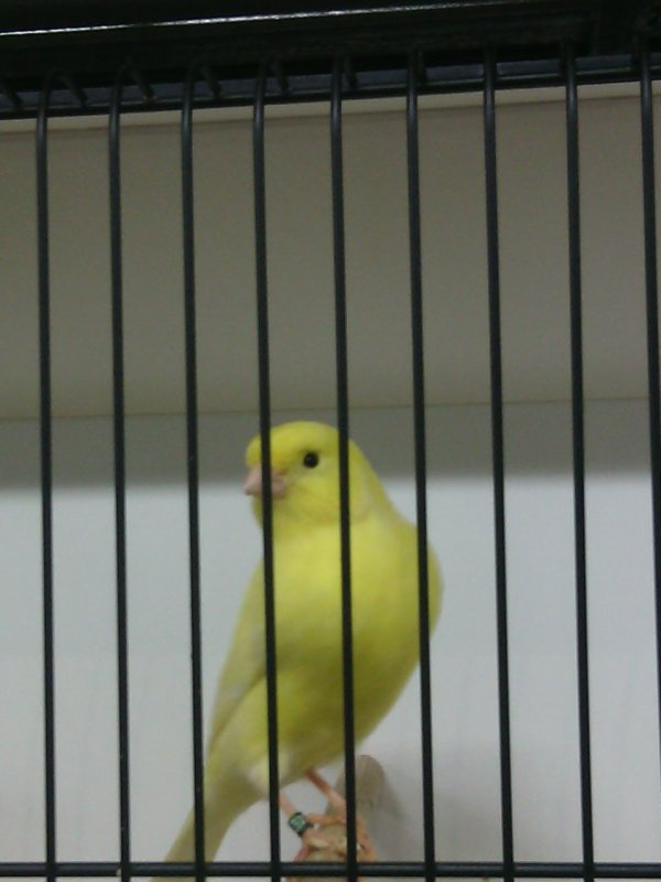 Quelques oiseaux de Leuven