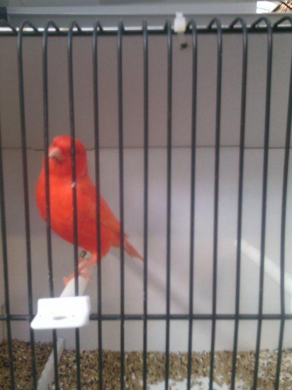 Quelque beau oiseaux du france