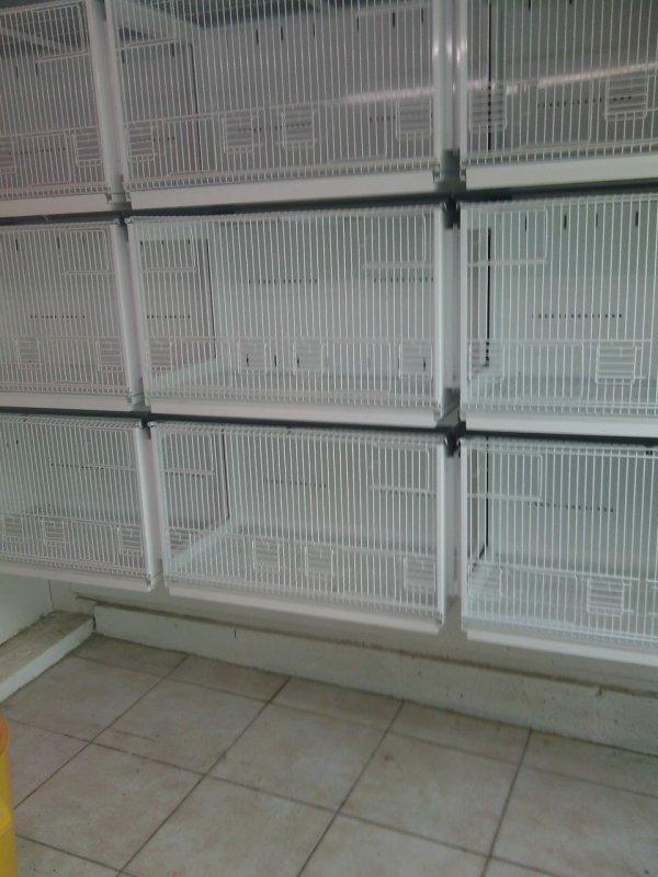 Le nettoyage des cages et terminée