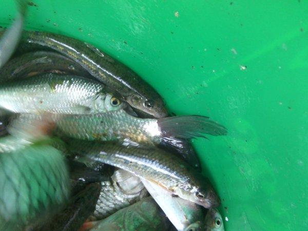 Une belle partie de pêche dans le canal de l'Ourcq