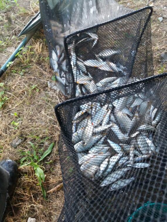 Une belle partie  de pêche dans  le canal de lourcq