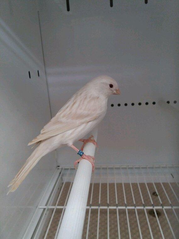 Préparation  des oiseaux