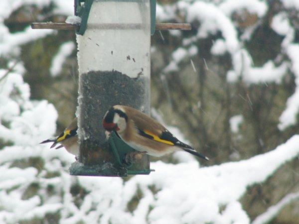 les oiseaux de mon jardin