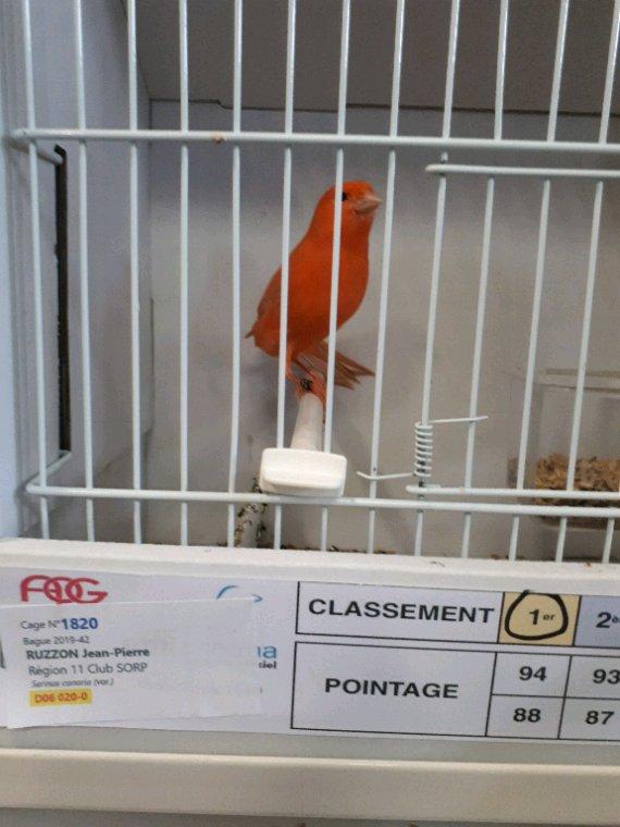 Quelques oiseaux primés à Bordeaux