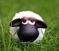 Bienvenue au pays du mouton =D