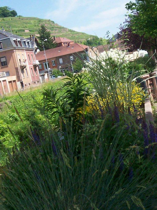 retour de promenade  samedi 2 juin 2012  deuxième partie