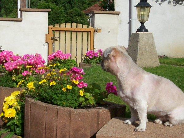 Photos de wendy et de  l'avant notre jardin
