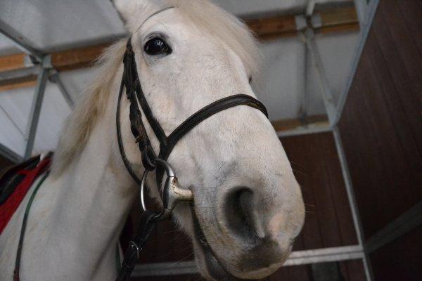 Le cheval est un cadeau de dieu à l'homme