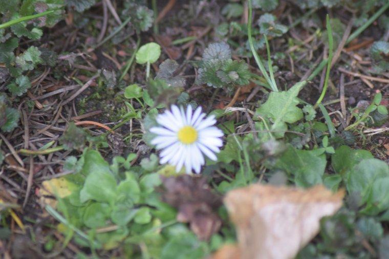 ...Quelques Jolies Fleurs .........:)