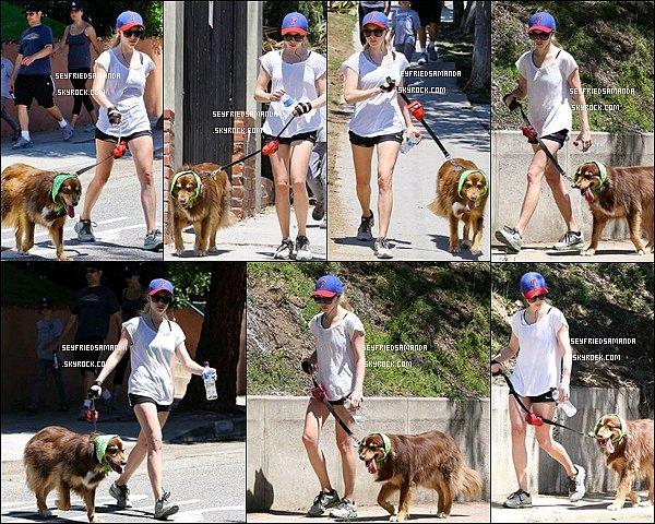 24 aout 2013 : Amanda & son chien Finn se promenant dans les rues de  Los Angeles en Californie. Amanda porte une tenue de sport simple et protège son chien du soleil en lui faisant porter un foulard sur la tête, quelle attention :)