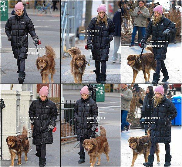 27 décembre 2013 : Amanda et son adorable chien Finn se sont promenés dans les rues de New York.Grande différence de température entre NY & LA, où vie la petite blonde. Am' portait un joli bonnet pour ne pas avoir froid.