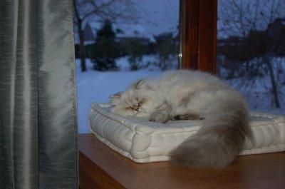 Une petite sieste... <3