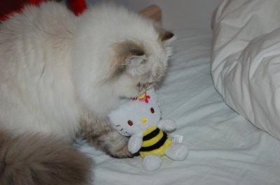 faline kitty <3