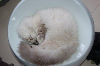 Cette photo nous fait craquer <3, la belle faline qui  fait sa sieste. Comment  peut-on lui résister? =D faline <3
