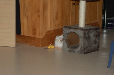 encore et toujours avec sa souris... =)