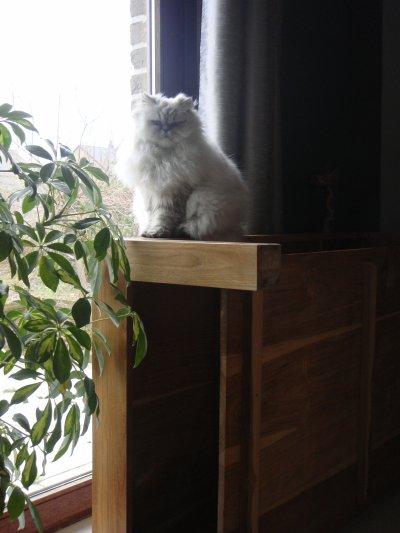 arbre à chat improvisé...