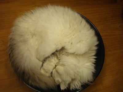 ce soir au menu; une faline rotie au four...  et oui faline adore s'endormir dans le plat décoratif du salon =D