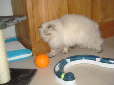 faline aime le ballon orange ^^