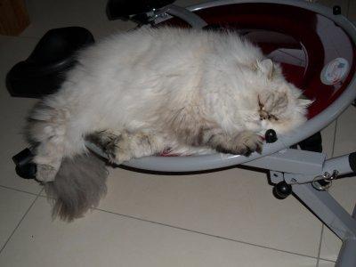 Après les vacances... ce sera le sport pour Faline ^^  Enfin... l'appareil de sport est la lui mais Falinou lui a trouvé une autre utilité ^^