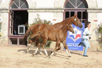 Trophée du foal vendéen 2010