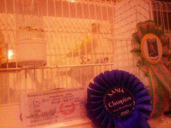 14th Pangretan Canary Contest - Best Color Canary 94 pts.