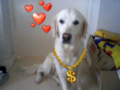 la femme la plus fidele dans ma vie ma chienne twixy