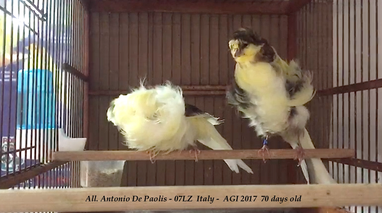 AGI 2017 in moulting