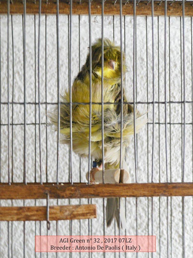 AGI Canary Green n° 32 2017 - Antonio De Paolis