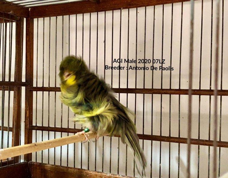 Young AGI Male Green 2020 : Antonio De Paolis 07LZ