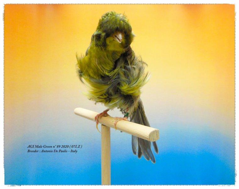 AGI Male Green n° 89 2020 - All. Antonio De Paolis