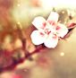 Photo de xLife-is-Beautiful