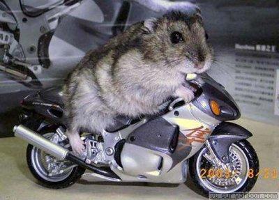 suite moto
