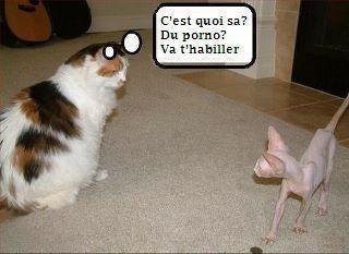 un peu d'humour !!!