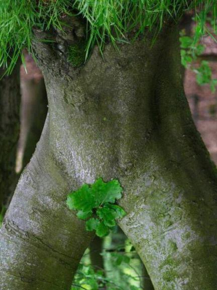 l arbre magik !!!! mdrrr