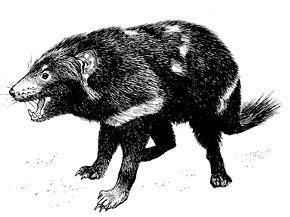 Le monstre de Tasmanie