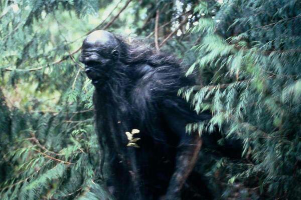 Témoignage de Francis - Une nuit terrifiante en forêt